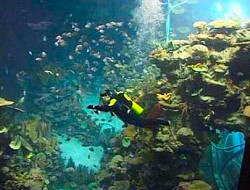 Guangzhou-Ocean-World2.jpg